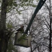 Кронирование деревьев в московской области