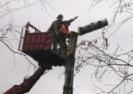 Кронирование старых деревьев