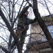 Кронирование деревьев по низким ценам