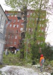 Вырубка деревьев с участка в Москве