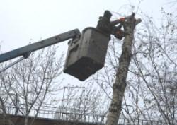 Цкев на удаление деревьев в московской области