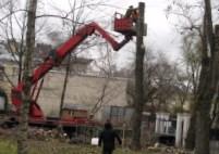 Удаление деревьев по низким ценам